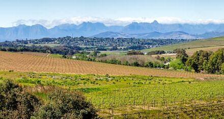 investir dans un domaine viticole